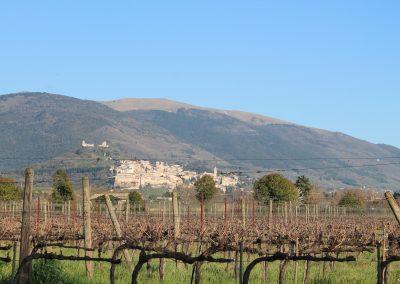 La vigna, ai piedi di Assisi